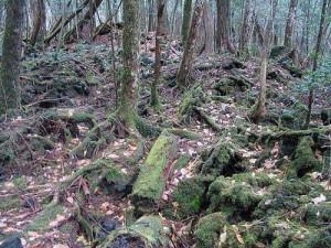 Лес самоубийц. Аокигахара