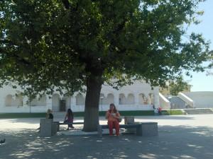 дуб, просто дуб, и мороженка, и кремль, и ветер и я